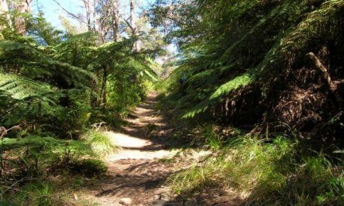 Zdjecie AUSTRALIA / NSW / Gulaga Nat. Park. / Szlak wzdluz paproci..
