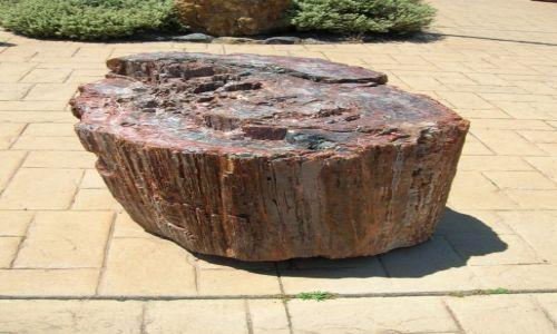 Zdjecie AUSTRALIA / ACT / Muzeum dinosaurow / Kamienne drzewo
