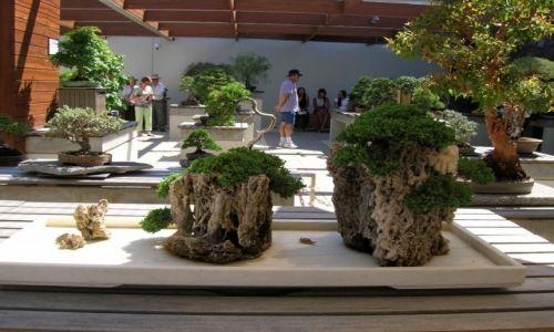 Zdjecie AUSTRALIA / ACT / Arboretum / Wystawa bonsai