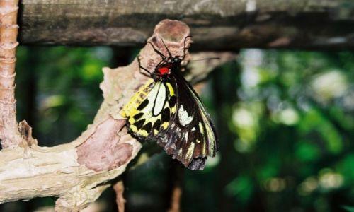 Zdjecie AUSTRALIA / Queenslad / Kuranda-Australian Butterfly Santuary / Konkurs