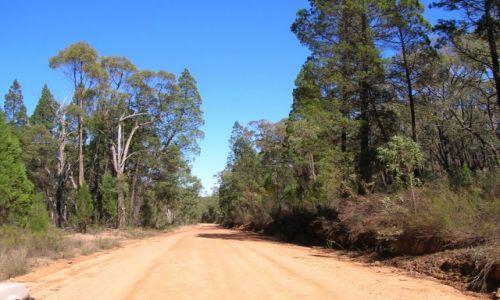 Zdjecie AUSTRALIA / Outback wschodni / Pilliga Scrub / Las cyprussowy