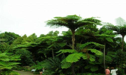 Zdjecie AUSTRALIA / Zach Sydney / Australian National Botanic Garden / Palmy..