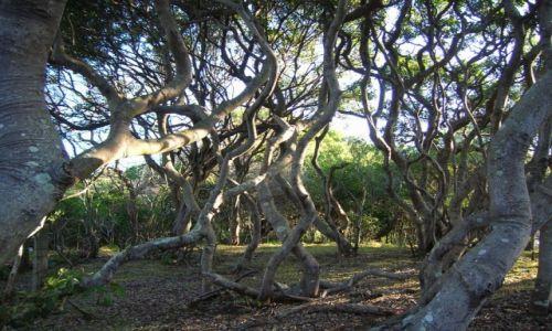 Zdjecie AUSTRALIA / Sunshine Coast / Dicky beach / Zaplatani w wiosennym tancu