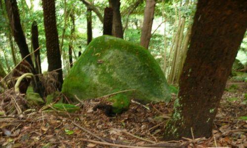 Zdjęcie AUSTRALIA / South Coasta / South Coast / Na kamieniu kamien..