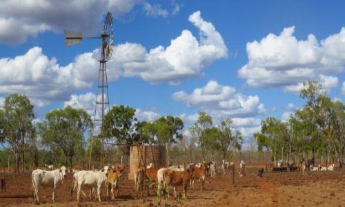 AUSTRALIA / Queensland / Chillagoe / klasyczna farma