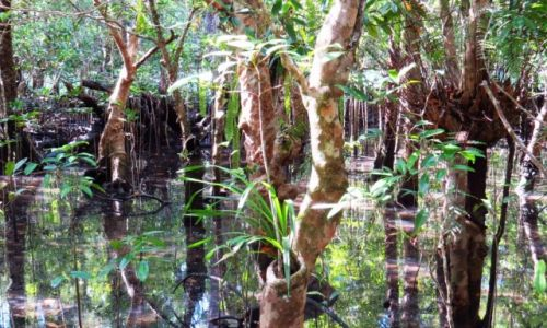 AUSTRALIA / Queensland / Cairns / Las deszczowy