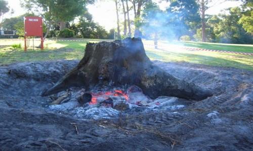 Zdjecie AUSTRALIA / Victoria / Bemm River / Palenie korzeni