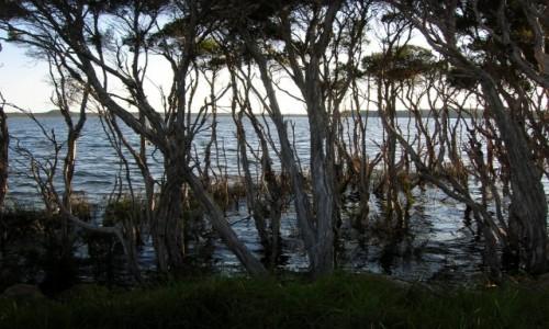 Zdjecie AUSTRALIA / Victoria / Bemm River / Bemm River inle