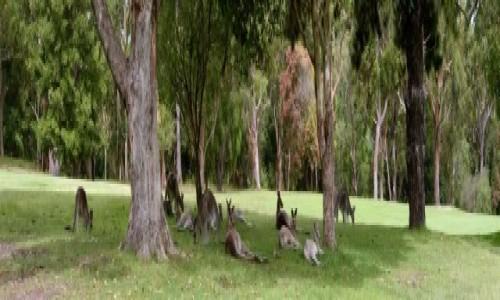 Zdjecie AUSTRALIA / new castle / new castle / kango