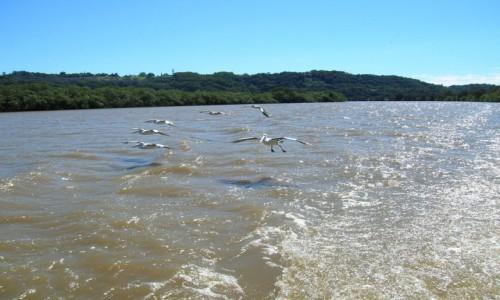 Zdjęcie AUSTRALIA / Wsch Australia / Tweed River / Lecimy