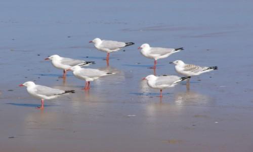 AUSTRALIA / NSW / Emerald Beach / Pod wiatr