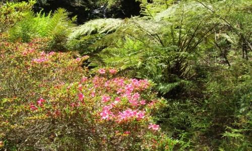 AUSTRALIA / NSW / Katoomba / Wiosna w gorach
