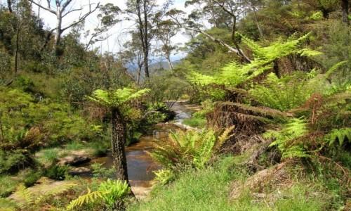 AUSTRALIA / NSW / Katoomba / Jak w raju..