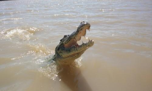 Zdjecie AUSTRALIA / NT / Darwin / Glodny krokodyl