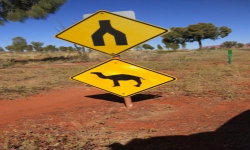 Zdjecie AUSTRALIA / NT / Outback / uwaga wielblady