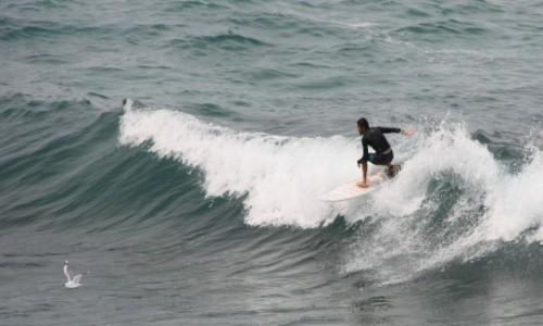 Zdjecie AUSTRALIA / Nowa Południowa Walia / Sydney / Na fali (na Bondi Beach) #1
