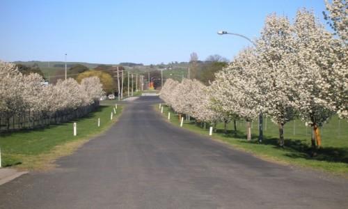 Zdjęcie AUSTRALIA / Blayney / okolice / Bialo