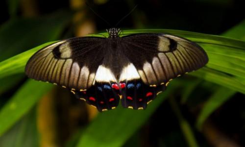 Zdjecie AUSTRALIA / NSW / Cairns / Następny motyl