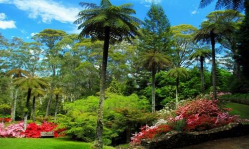 Zdjecie AUSTRALIA / NPW / Mt.Wilson / Ogrody