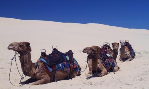 Zdjecie AUSTRALIA / NPW / Port Stephens  / Na pustyni