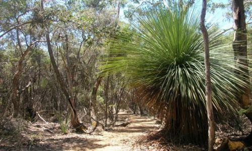 Zdjecie AUSTRALIA / brak / Flinders Ranges / szlakiem Flindersa