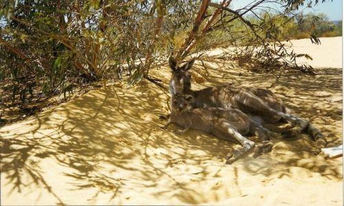 Zdjecie AUSTRALIA / Australia Zachodnia / rezerwat przyrody Marchison River  / mama z dzieckiem