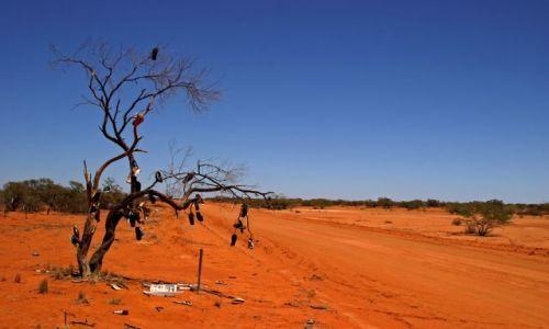 Zdjecie AUSTRALIA / Outback / ok. Cobra Station / Drzewo sanda�ow