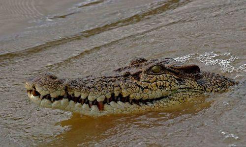 Zdjęcie AUSTRALIA / Terytorium północne / ok. Darwin / Milusiński