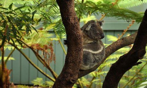 Zdjecie AUSTRALIA / new  south  wales / brak / Boss