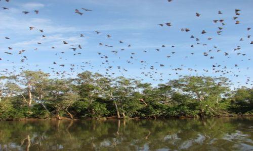 Zdjecie AUSTRALIA / okolice Darwin / rezerwat / budzące się nietoperze