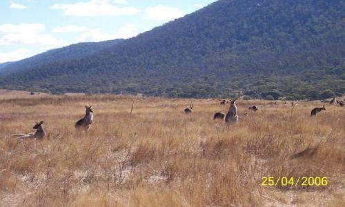 Zdjecie AUSTRALIA / -Canberra / canberra / krajobraz