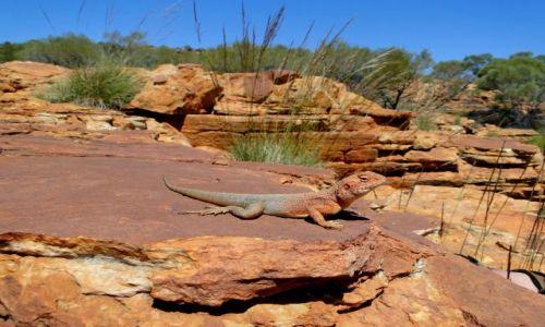 Zdjecie AUSTRALIA / Terytorium Północne / King`s Canyon / Ten ma bliżej do słońca