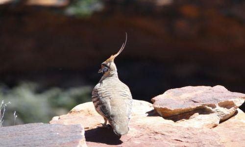 Zdjęcie AUSTRALIA / Terytorium Północne / King`s Canyon / Zaraz odleci