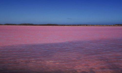 Zdjęcie AUSTRALIA / Australia Zachodnia / Lake Hutt - Port Gregory / Naprawdę istnieją