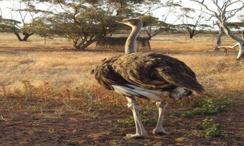 Zdjęcie AUSTRALIA / Australia Zachodnia / Riverside / Emu widziany od tyłu