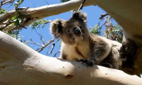 Zdjecie AUSTRALIA / Victoria / Great Ocean Road / Misiek :)