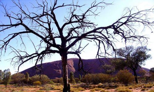 Zdjecie AUSTRALIA / środkowa Australia / Ayers Rock / inne spojrzenie na Uluru