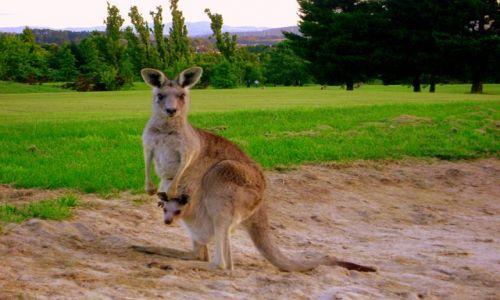 Zdjecie AUSTRALIA / Central Teryt. / Cambera / one