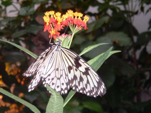 Zdjęcia: Wiedeń, Motyl, AUSTRIA