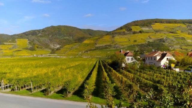 Zdjęcia: Unterloiben, Dolina Wachau, Widok z okna pensjonatu, AUSTRIA