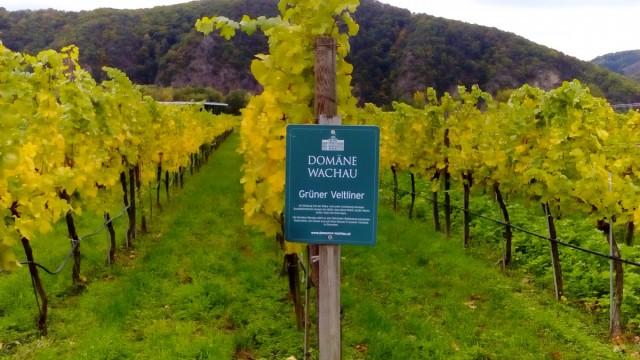 Zdjęcia: Dolina Wachau, Dolina Wachau, Bardzo smaczne, AUSTRIA