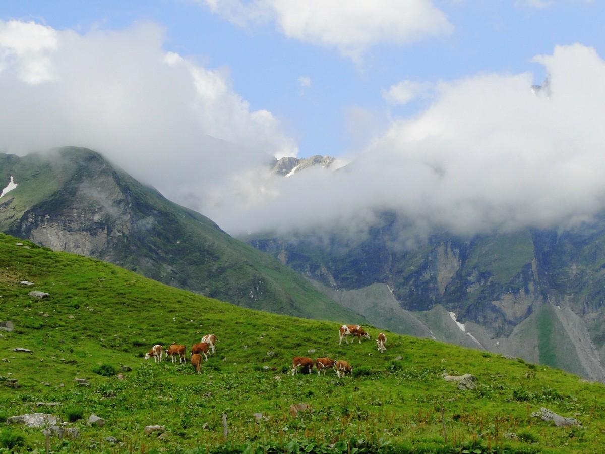 Zdjęcia: Park Narodowy Wysokie Taury, Kraj Salzburski, Lato w Alpach, AUSTRIA