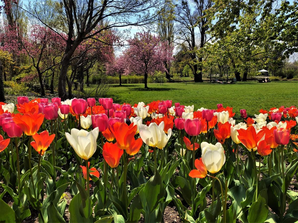Zdjęcia: park przy Dunaju, Wiedeń, kolorowo ...wiosennie .., AUSTRIA