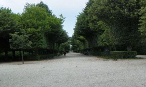 Zdjecie AUSTRIA / - / Wiedeń / Korytarz z drzew