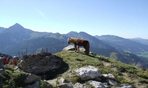 Zdjecie AUSTRIA / Tyrol / Tannheim / W Alpach