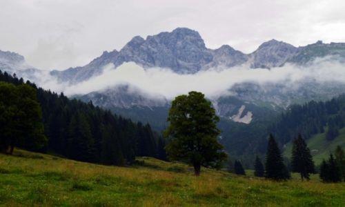 Zdjecie AUSTRIA / Alpy / Alpy / Dzewo