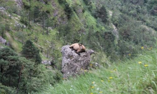 Zdjęcie AUSTRIA / Alpy Salzburskie / Gmunden / Niezła miejscówka:-)