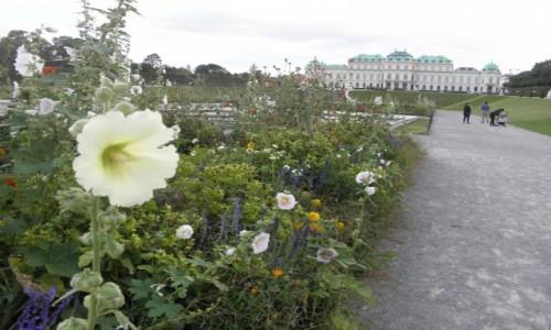 Zdjecie AUSTRIA / Wiedeń / Wiedeń / klasycznie