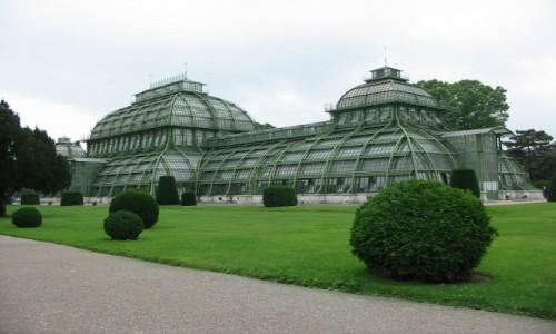 Zdjęcie AUSTRIA / Wiedeń / Schonbrunn / Palmiarnia