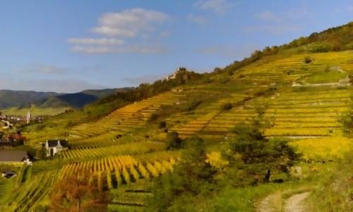 AUSTRIA / Dolina Wachau / Dolina Wachau / Tarasy winnic